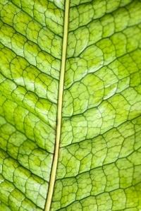 Evoluzione vegetali erba volant for Nicchia sinonimo