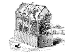 eastlake-victorian-wardian-case