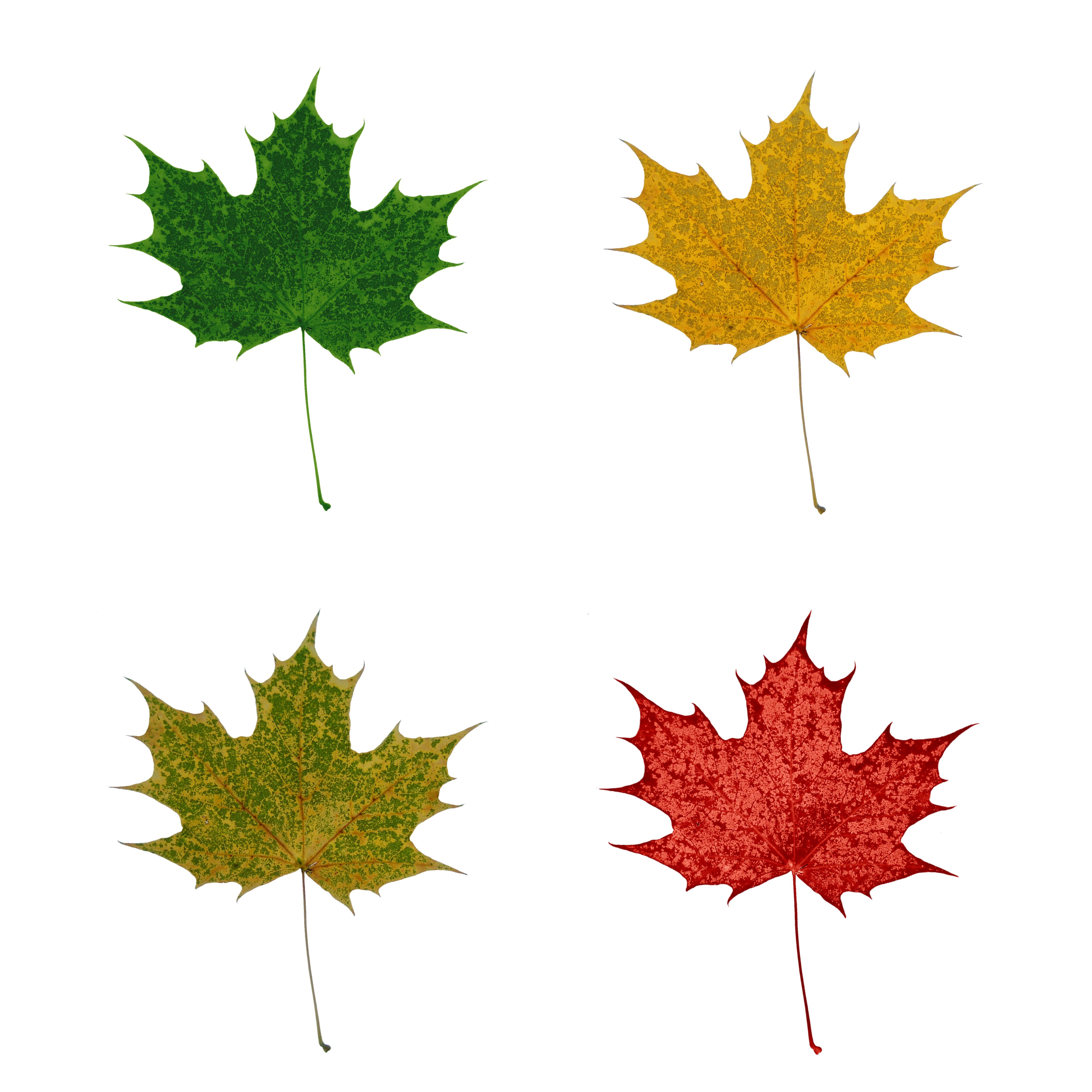 Маленькие картинки листьев